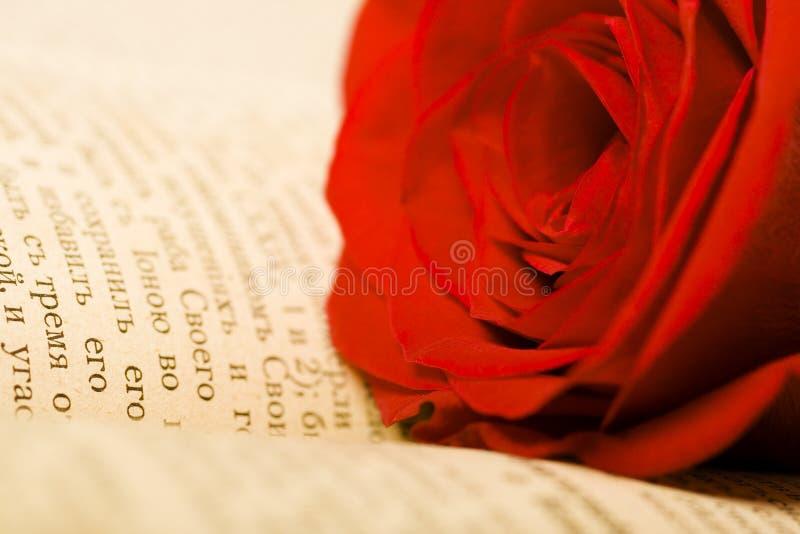 piękna książka rose obrazy stock