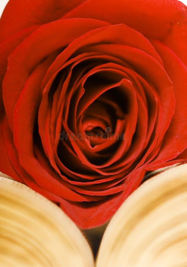 piękna książka wzrastał obrazy stock