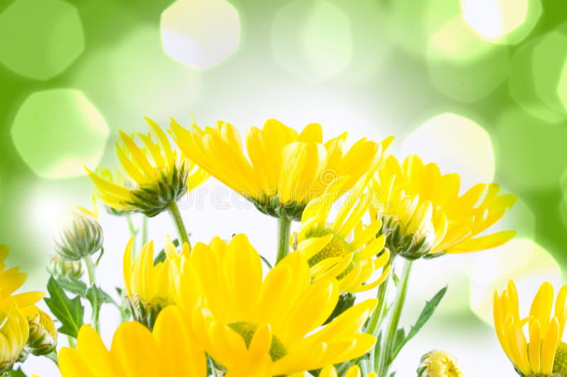 piękna kwiatów macro wiosna zdjęcia royalty free