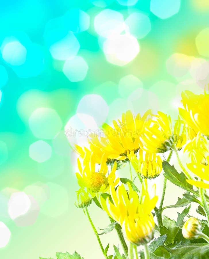 piękna kwiatów macro wiosna fotografia royalty free