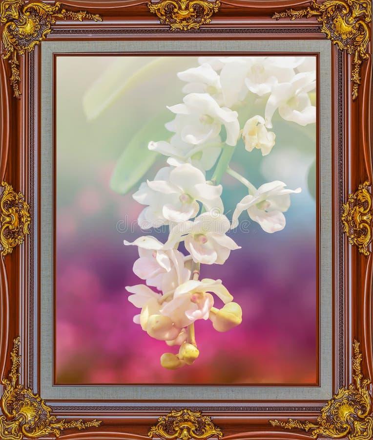 Piękna kwiat orchidea w Antykwarskiego spojrzenia koloru obrazka złocistym fram zdjęcie royalty free