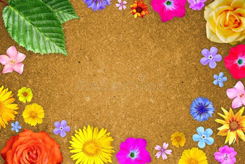 Piękna kwiat rama z pustym w centrum na pomarańczowym hardboard tle Kwiecisty skład wiosny lub lata kwiaty obraz stock