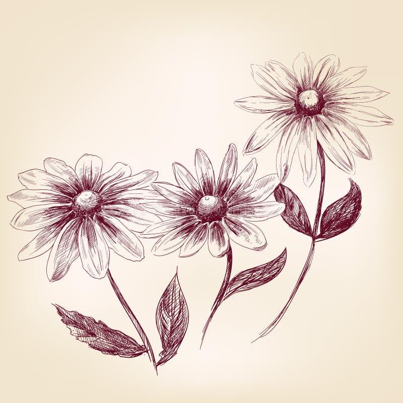 Piękna kwiat stokrotek wektoru ilustracja ilustracji
