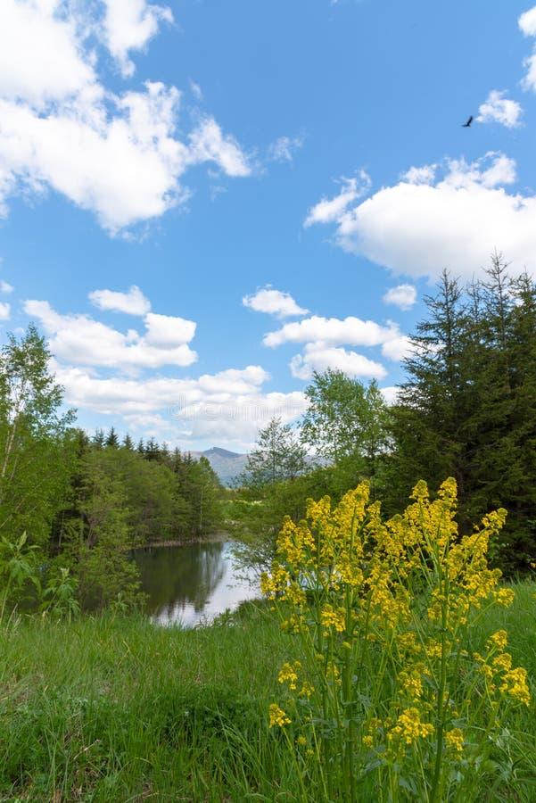 Piękna lasowa halna sceneria przy brzeg jeziora fotografia stock
