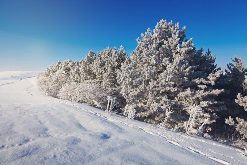 piękna lasowa zima obrazy royalty free