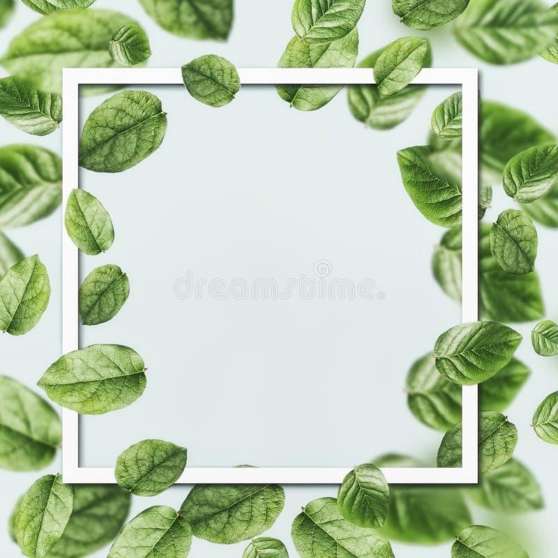 Piękna latanie zieleń opuszcza tło z papierową karcianą ramą Kreatywnie układ zdjęcie stock