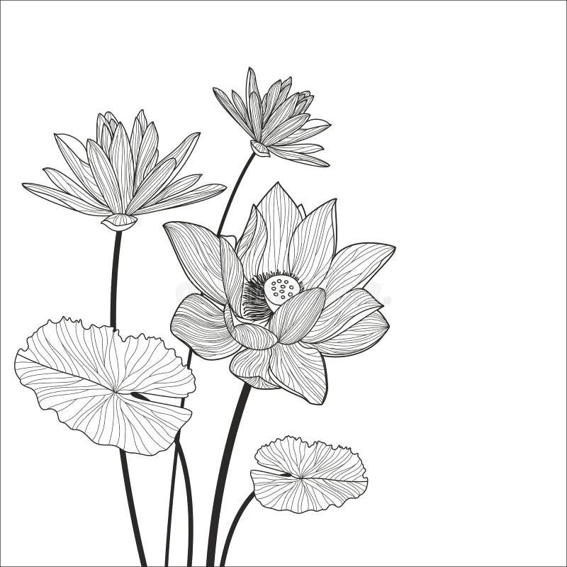Piękna lotosowego kwiatu kreskowa ilustracja Wektorowy abstrakcjonistyczny czerń ilustracja wektor
