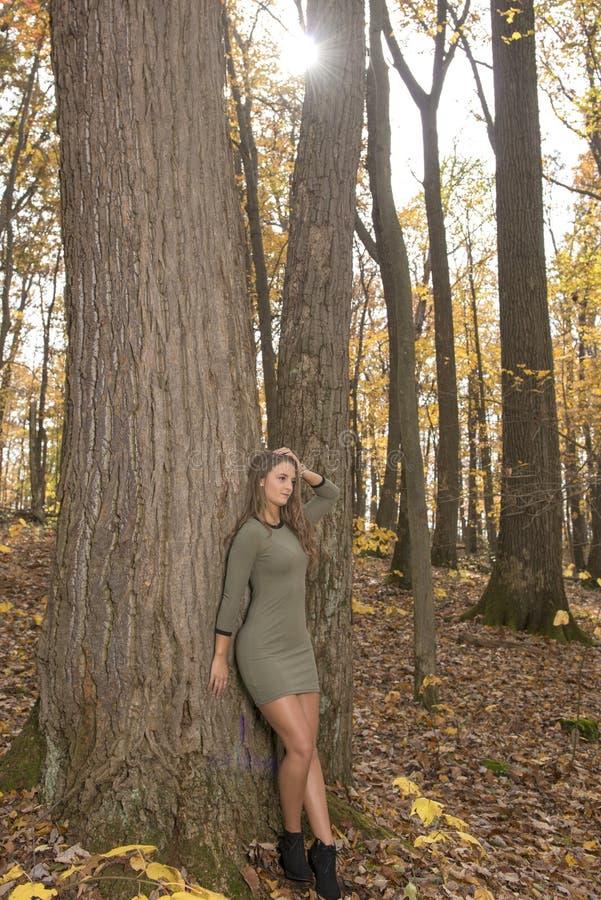 Piękna młoda kobieta w zieleni sukni pozach w jesieni drewnach fotografia stock