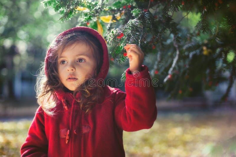 Piękna mała dziewczynka jako czerwony jeździecki kapiszon bawić się przy jesień parkiem obrazy royalty free