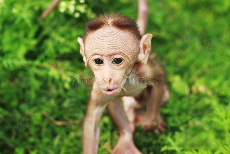 Piękna mała małpa fotografia stock