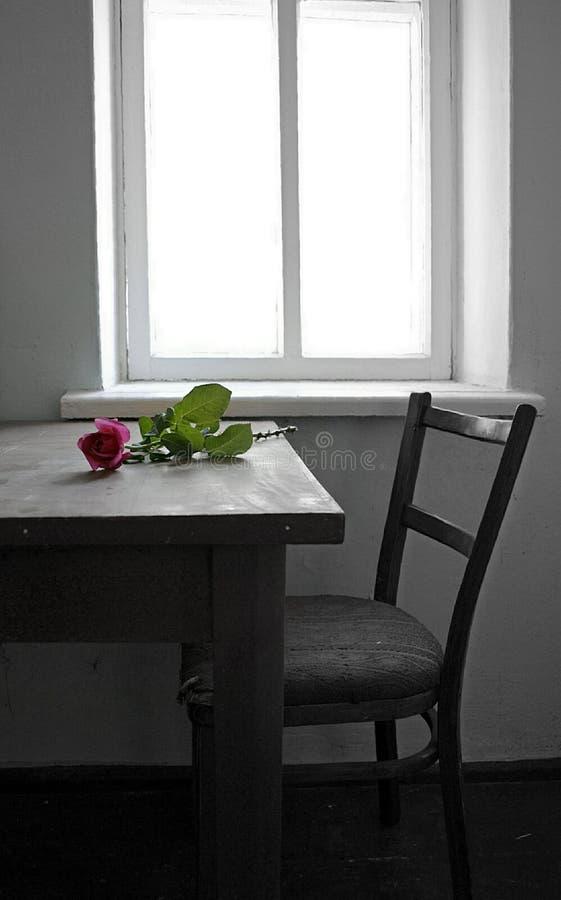 Piękna menchii róża na starym drewnianym stole okno fotografia stock
