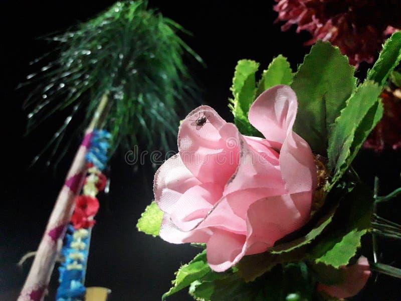 Piękna menchii róża z zielonym liściem fotografia stock