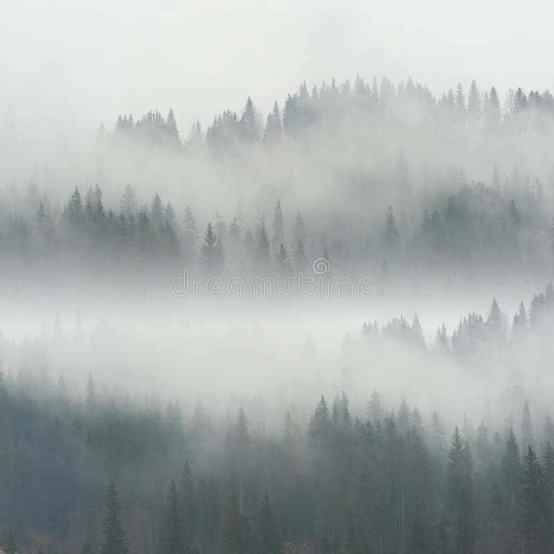 Piękna mgła w lesie zdjęcia stock
