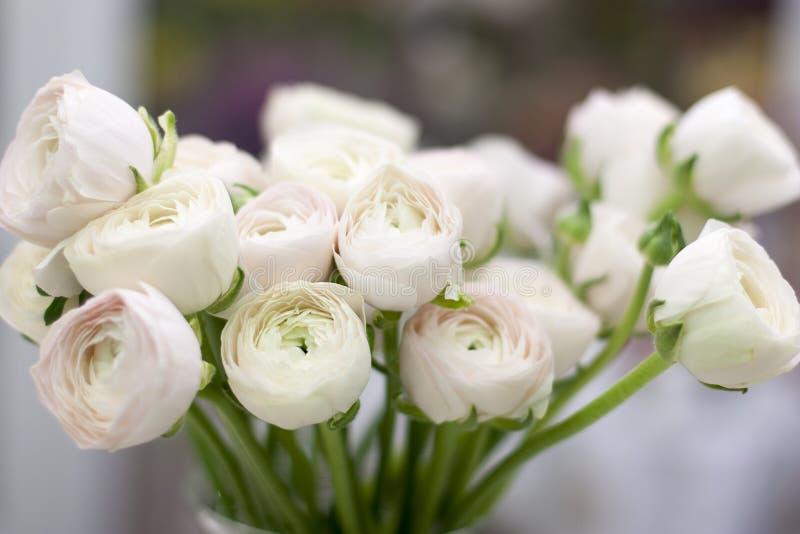 Piękna miękkich części menchii wiosna kwitnie zbliżenie Różowy ranunculus w wazie obraz stock
