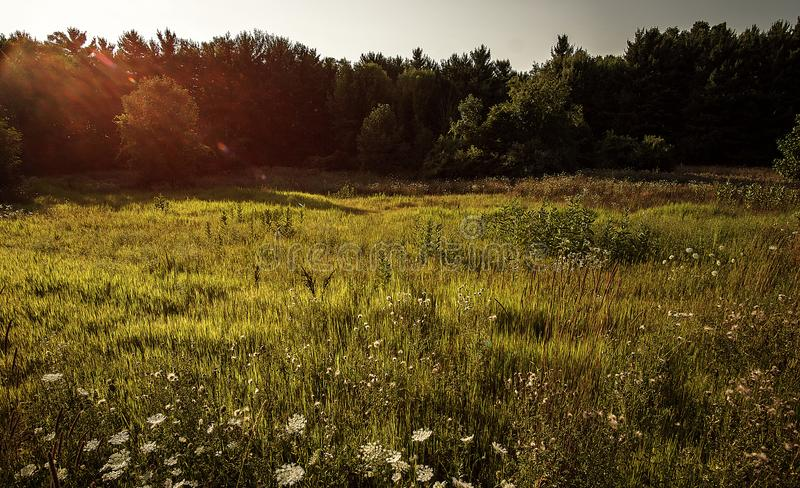 Piękna Michigan łąka fotografia stock