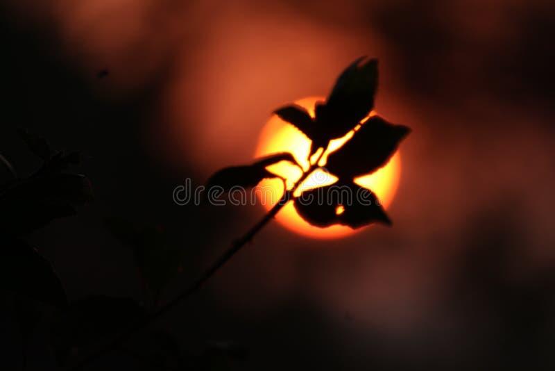piękna nad ptak chmur kolory muchy złota charakter wcześnie rano zwiększa morza przyjemny cicho odbicie na słońcu zdjęcie stock