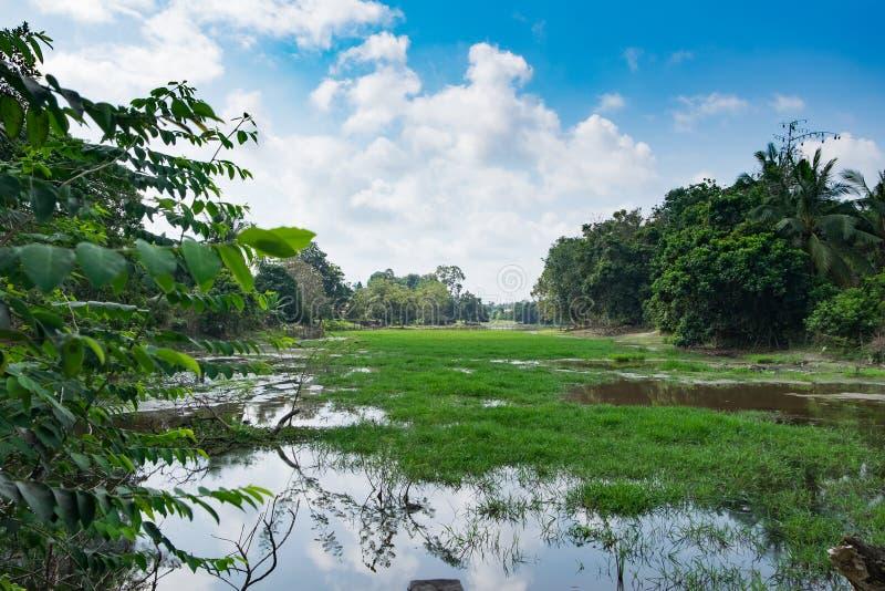 Piękna natura, bagno i odbicie przy światłem dziennym z chmurnym niebieskim niebem, obrazy royalty free