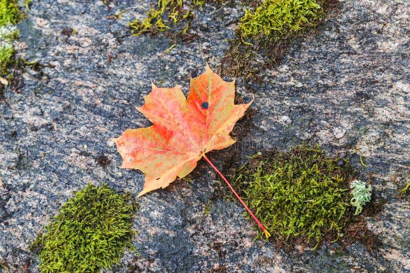 Piękna natura Latvia fotografia royalty free