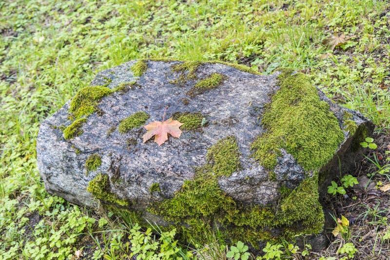 Piękna natura Latvia fotografia stock