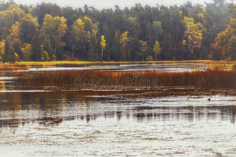 Piękna natura Latvia obraz stock