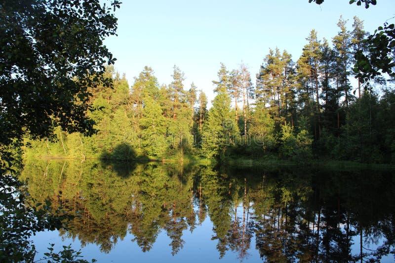 Piękna natura przy jeziorem obraz royalty free
