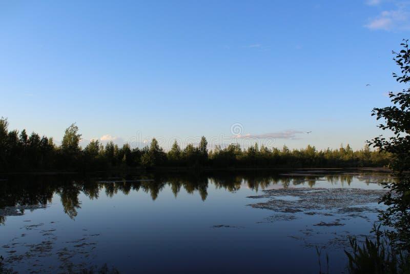 Piękna natura przy jeziorem zdjęcie stock