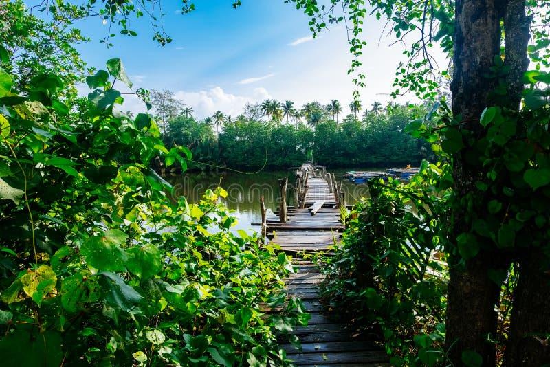piękna natura, stary drewniany most i odbicie, obraz royalty free