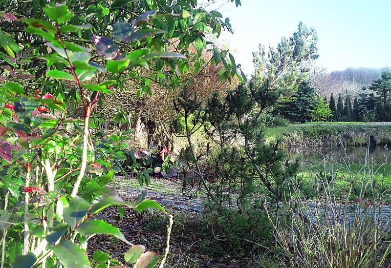 Piękna natura w wczesnej jesieni obraz stock