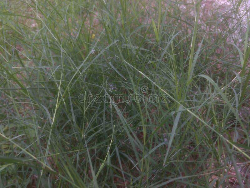 Piękna naturalna trawa przy ranku wschodem słońca obraz stock