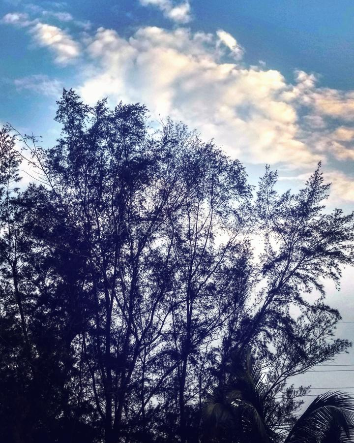 piękna natury zdjęcia stock