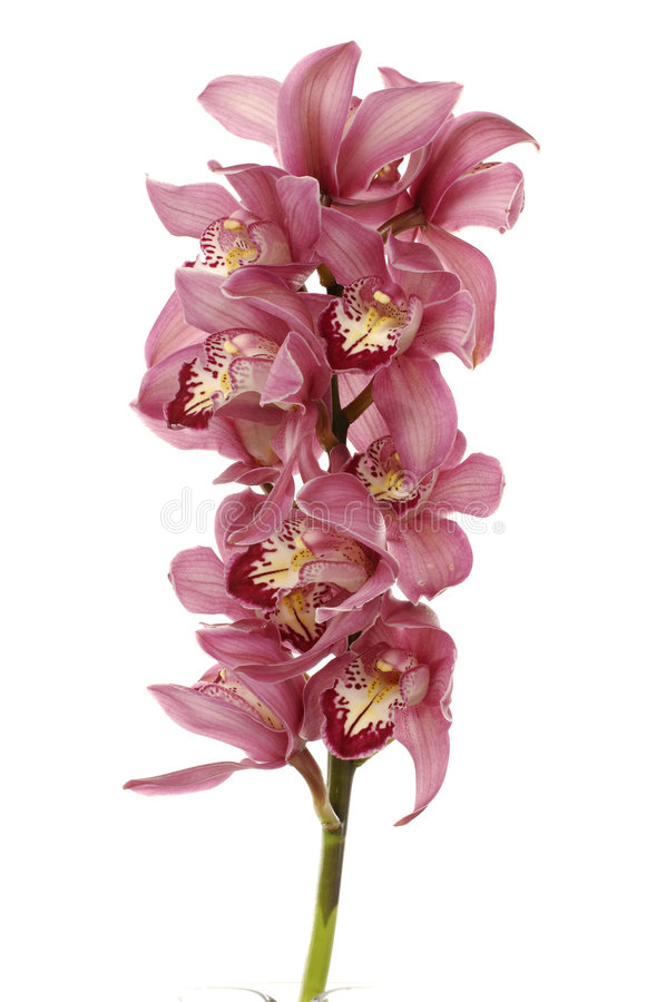 piękna orchidea zdjęcie royalty free
