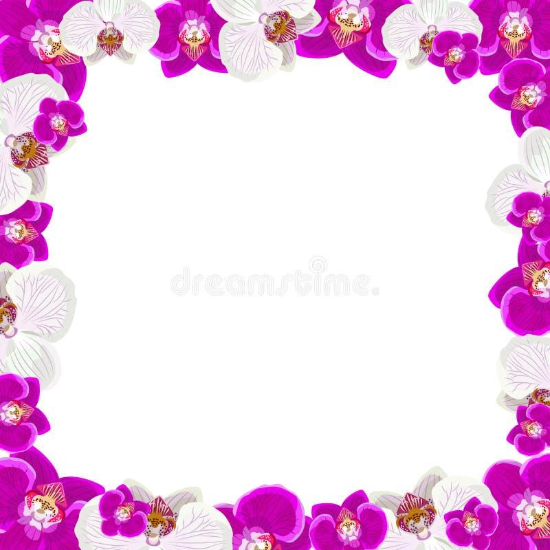 Piękna orchidea kwiatów rama na bielu ilustracja wektor