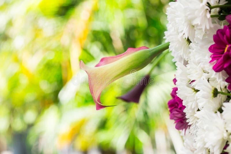 Piękna orchidea w ogródach fotografia royalty free