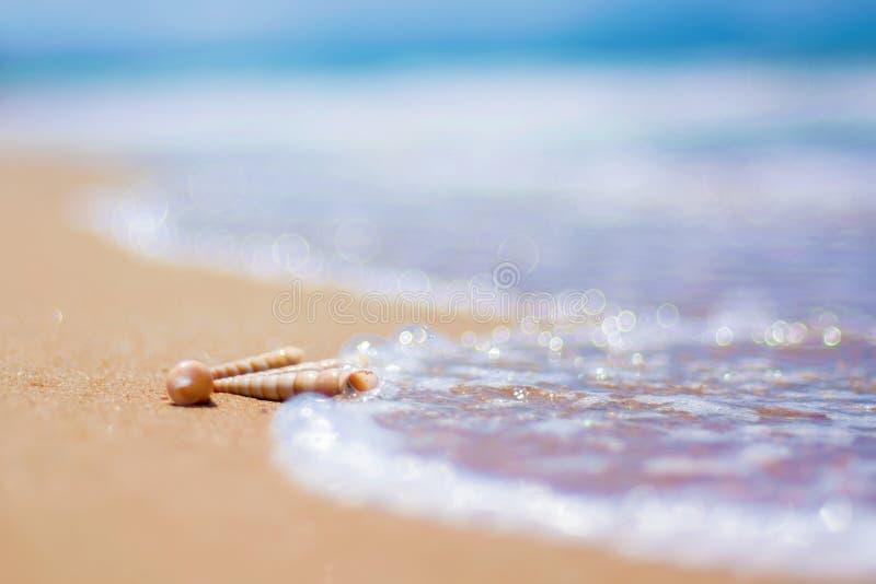 Piękna ozdobna skorupa kłama na brzeg morze, turkus fala owija na brzeg obraz stock