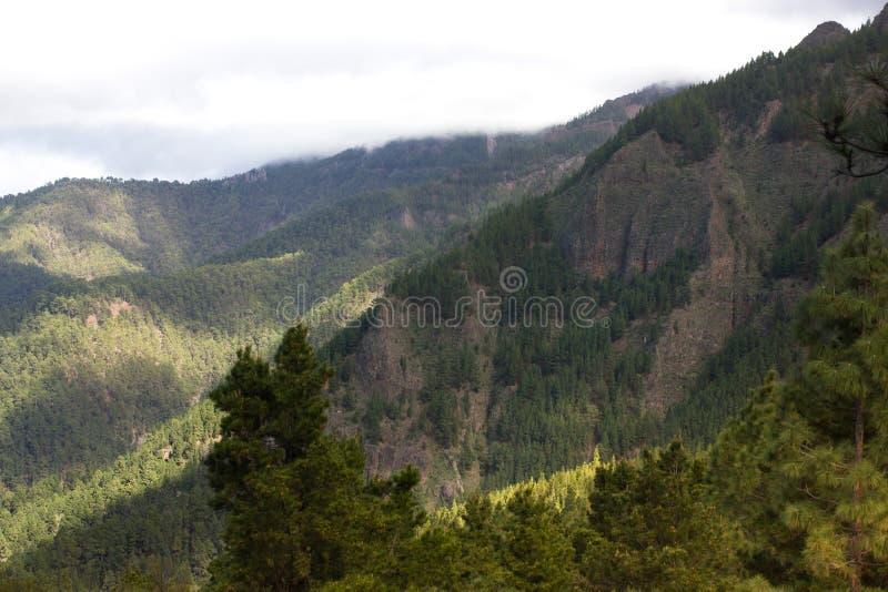 Piękna panorama sosnowy las z pogodnym letnim dniem Iglaści drzewa Podtrzymywalny ekosystem teide Tenerife fotografia stock