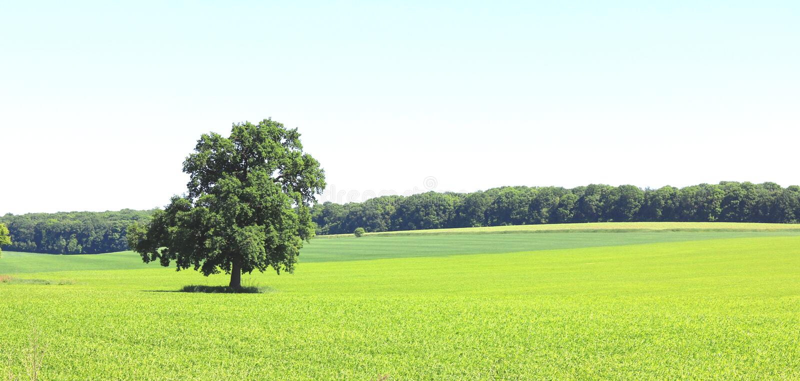 Piękna panorama z lato krajobrazem z osamotnionym drzewem obraz stock