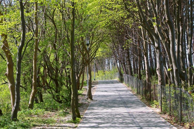 piękna parkowa wiosna fotografia royalty free