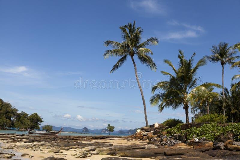 Piękna piaskowata plaża z drzewkami palmowymi i niebieskim niebem Krabi Tajlandia zdjęcie stock