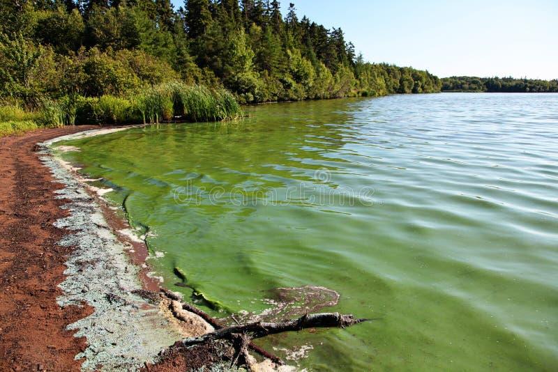 Piękna piaskowata plaża z skałami fotografia stock