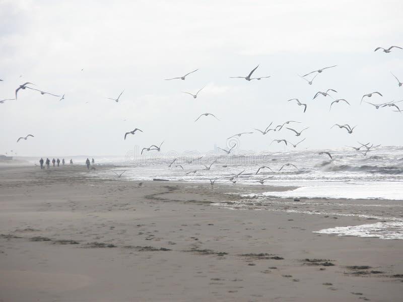 Piękna plaża 12 fotografia stock