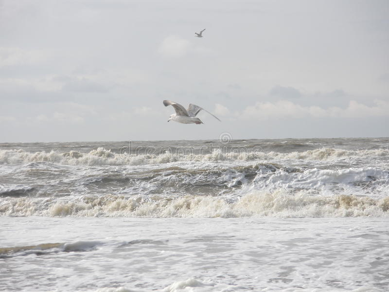 Piękna plaża 11 zdjęcia royalty free