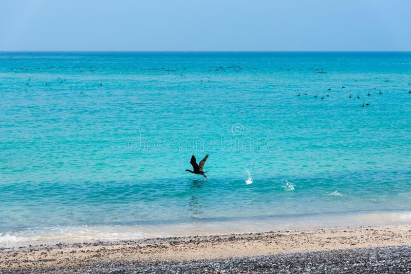 Piękna plaża pełna ptaków zdjęcie royalty free