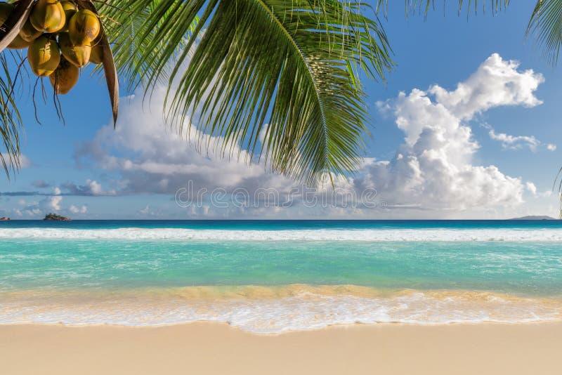 Piękna plażowa witth Coco palma obrazy stock