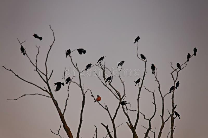 Piękna ptasia fotografia w naturalnym środowisku zdjęcie royalty free