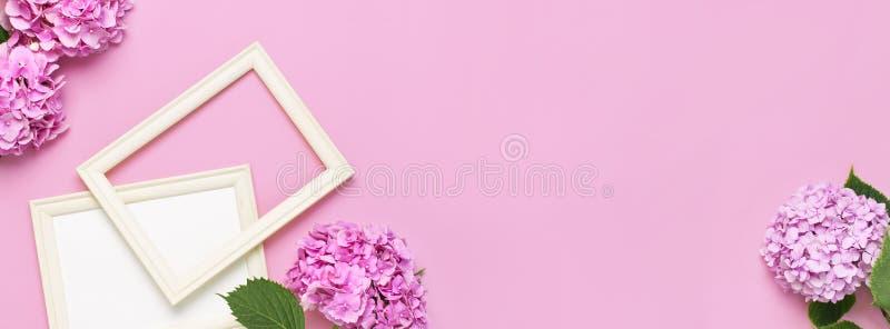 Piękna różowa hortensja kwitnie, białe drewniane fotografii ramy na różowym tle odgórnego widoku mieszkanie kłaść kopii przestrze obraz royalty free
