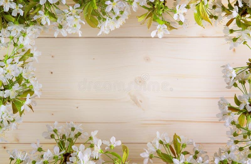 Piękna rama z kwiatami wiśnia wiosny lato fotografia stock