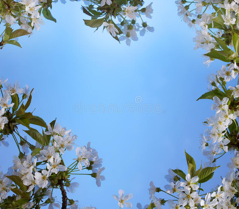 Piękna rama z kwiatami wiśnia wiosny lato obraz royalty free