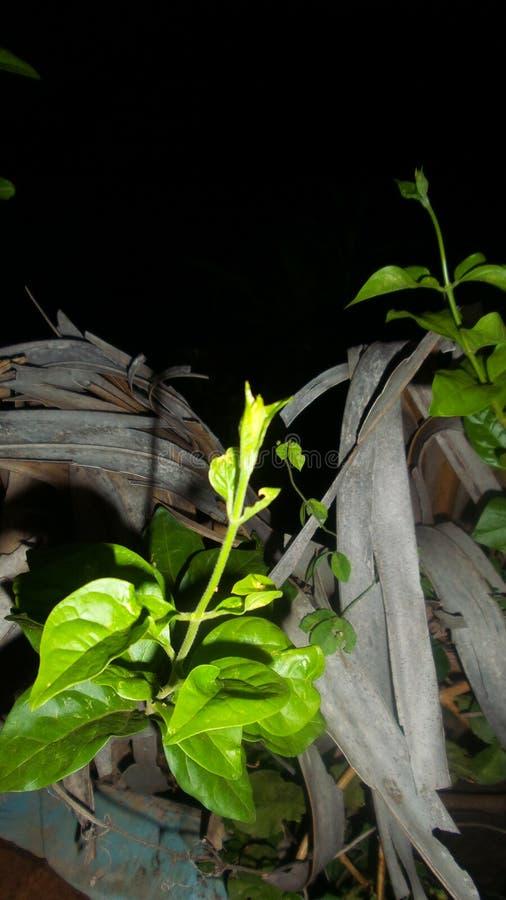 Piękna roślina i leafe fotografia stock