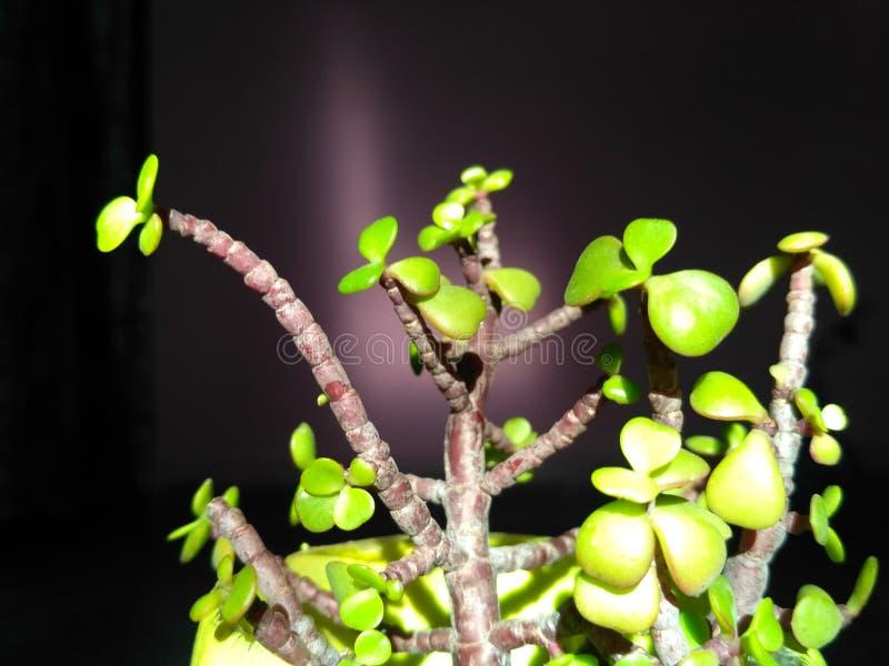 piękna roślinnych obraz royalty free
