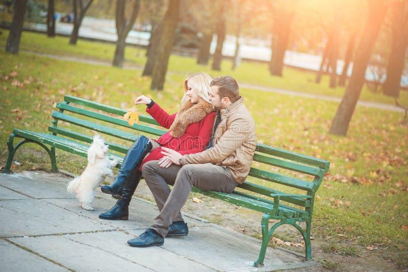 Piękna rodzinna para wydaje czas w jesień parku z białym ślicznym Maltańskim psem zdjęcie stock
